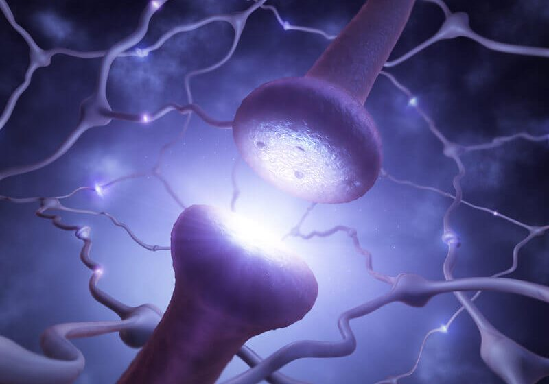 Closeup of the synapse transmitting signal along neuron network.
