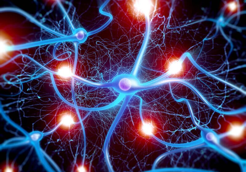 High quality 3d macro render of Neuron cells