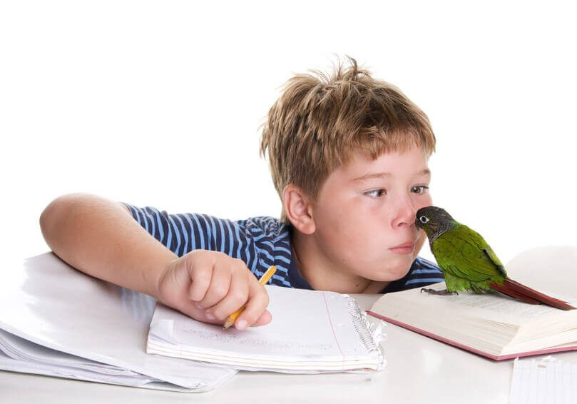 A nine year old boy is playing with his pet conure who is sitting on a book.  He is making funny faces at the bird.  The text on the book is blurred out.For more photos featuring this bird click here